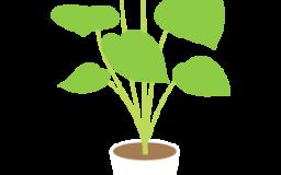 植物の癒し