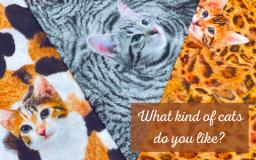 【新商品】あなたはどのネコちゃんが好き?リアルなネコプリント