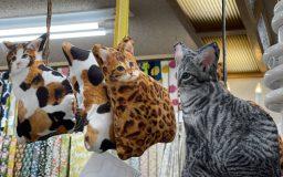 【作例】猫ぬいぐるみ